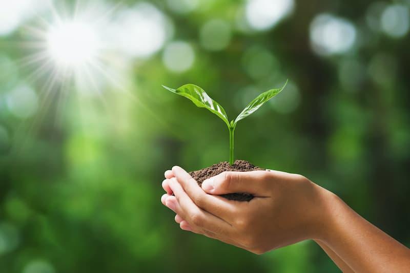 Bitki Gelişim Düzenleyicilerinin Kök Gelişimi ve Verime Etkisi