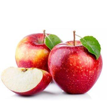 Elma Besleme Programı