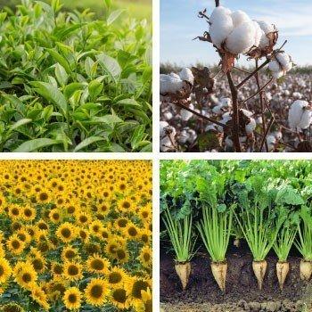 Endüstri Bitki Besleme Programları